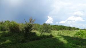 unser neues Grundstück in Weisenheim am Sand von der benachbarten Wiese aus gesehen.