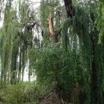 Sturmschäden auf dem Nachbargrundstück